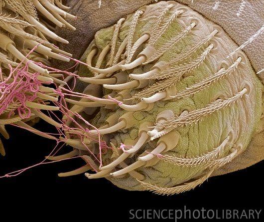 örümceğin ağ hortumları