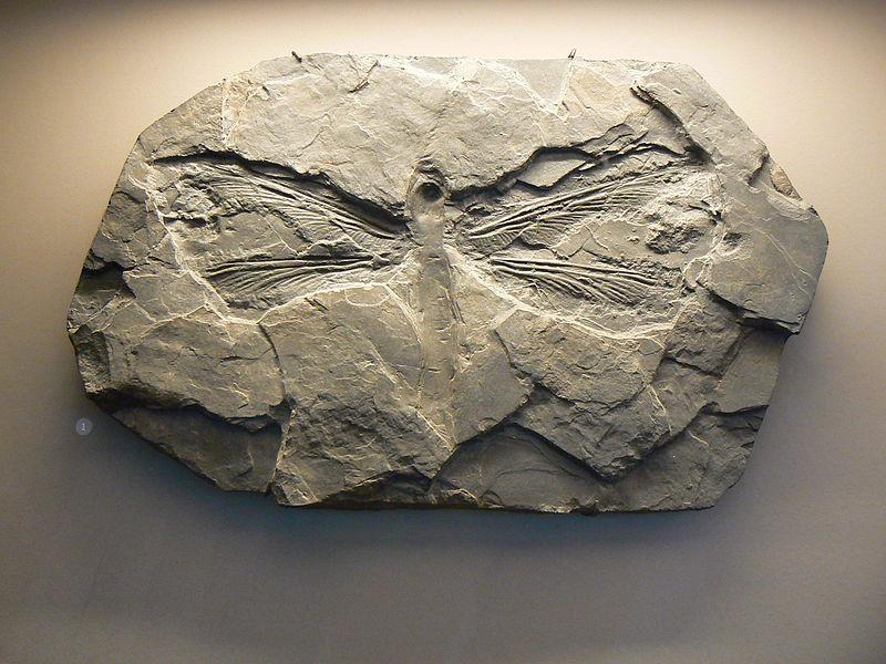 Meganeuradae Dev tarih öncesi yusufçuk