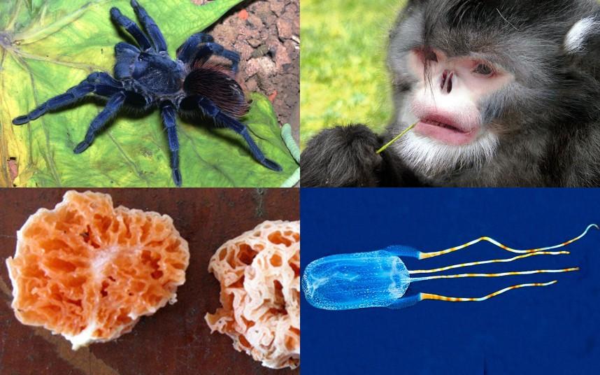 yeni keşfedilen türler 2012