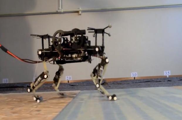 kedi robot-gerçek bilim