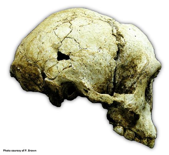 Yeni bir insan türü homo floresiensis