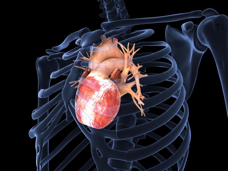 Kalp Krizi Sonrası Kalbi Onarabilen İlaç Geliştirildi