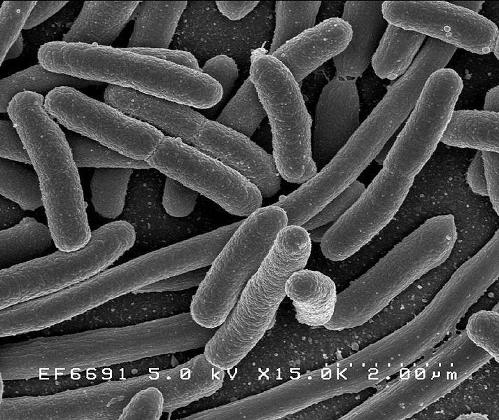 bilim adamları e.colinin yapısıyla oynayarak, benzin ürettirmeyi başardılar.