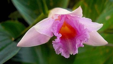 pembe orkide yeni tür-gerçek bilim