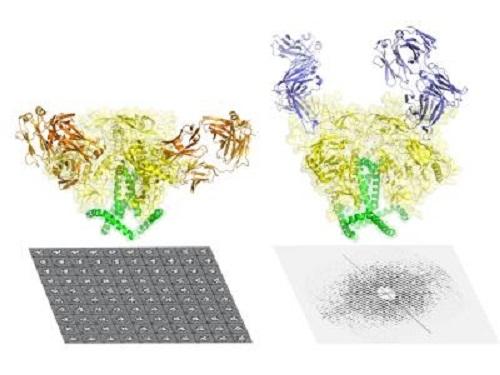 aids zarf proteini