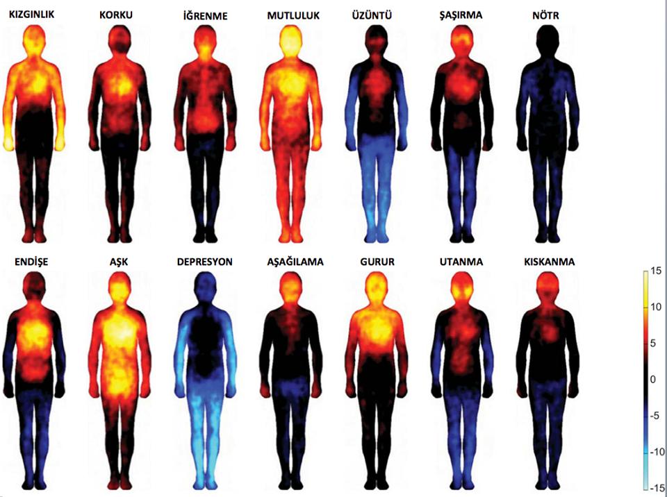 vücuttaki duyguların haritası