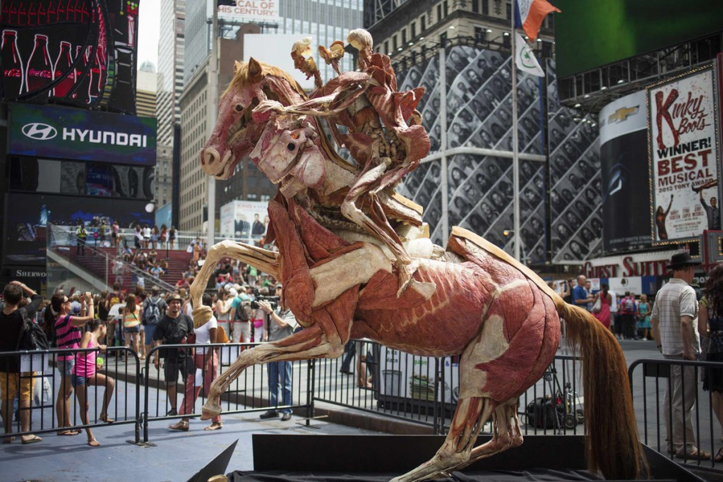 Gunther von Hagens' anatomical horse and rider 'Rearing Horse with Rider' is seen on display at Times Square in New York