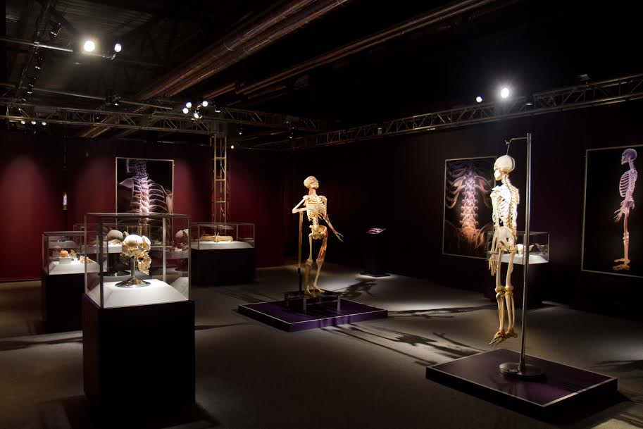 the human exhibition istanbul