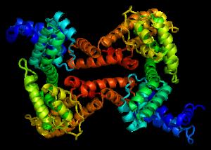 800px-Protein_GC_PDB_1j78