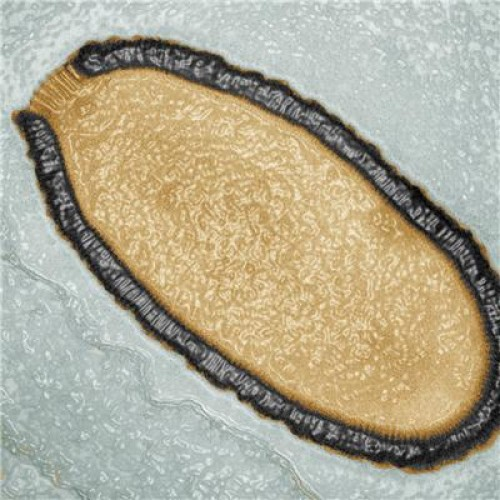 dev virüs pithovirüs-gerçek bilim