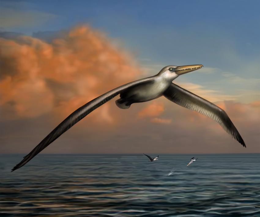 pelagornis sandersi en büyük kuş