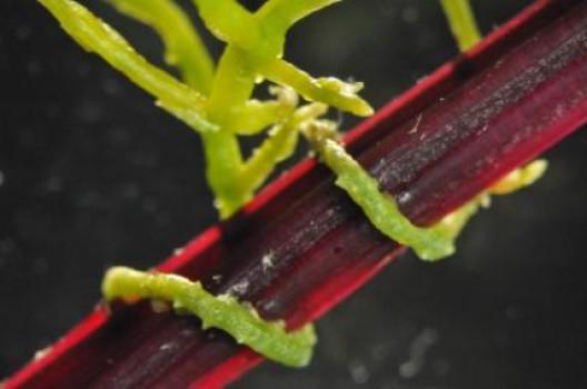 bitkiler arası iletişim