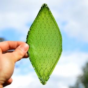 silk-leaf