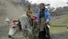 tibet irtifa dayanım