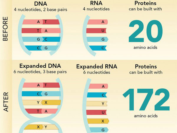 genetik alfabe 6lı