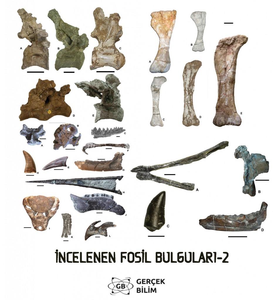 dinozor-b
