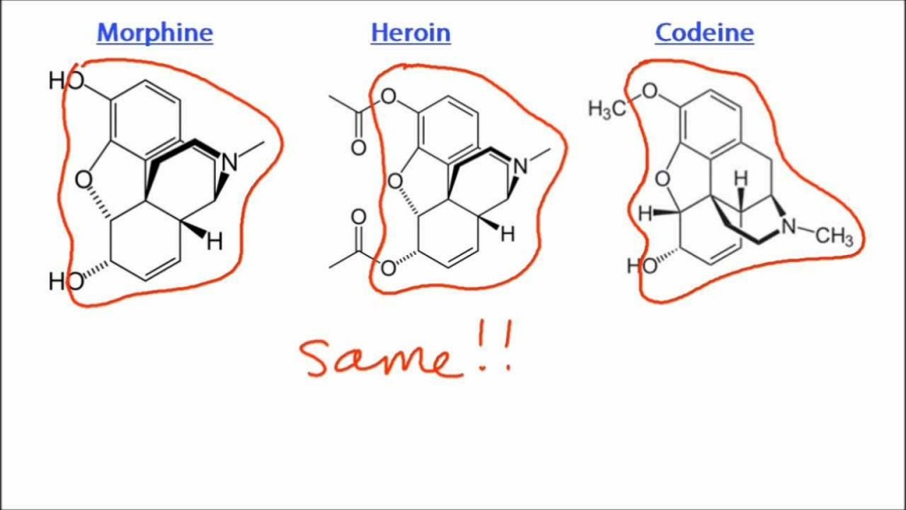 eroin morfin kodein