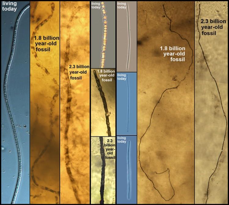 evrimsel biyoloji sülfür bakterisi