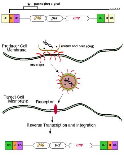 genom entegrasyon