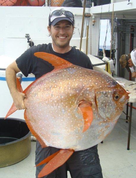 sıcakkanlı balık