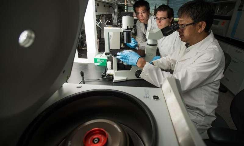 HIV Virüsünün Çoğalmasını Engelleyen Protein Bulundu