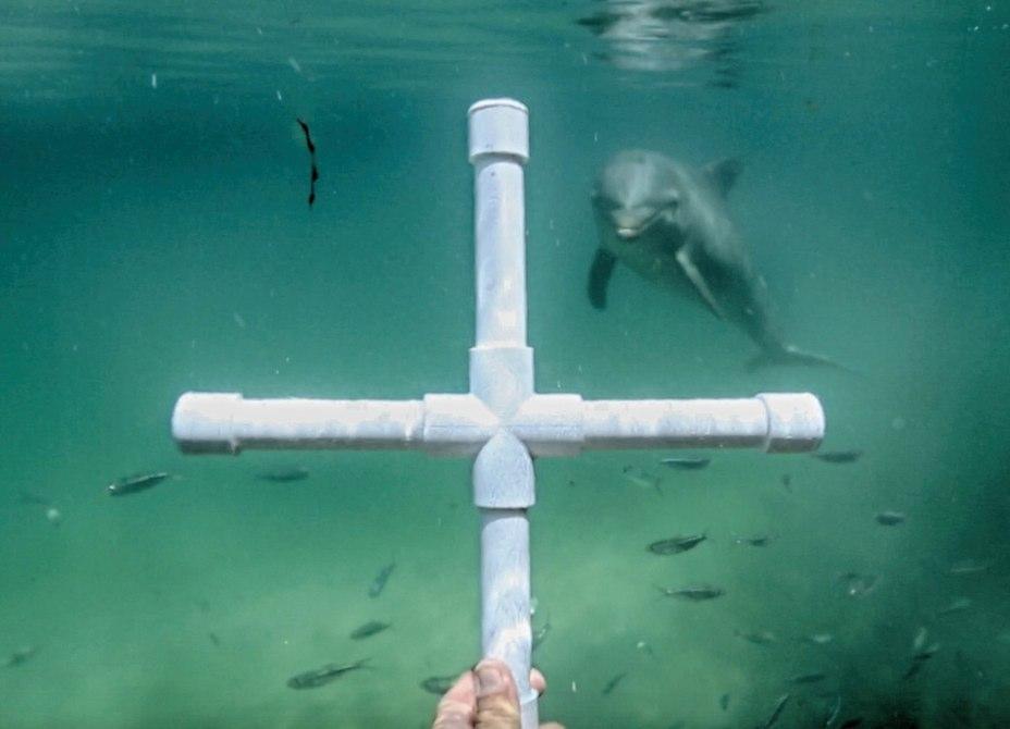 dolphin-sonar-imaging-3