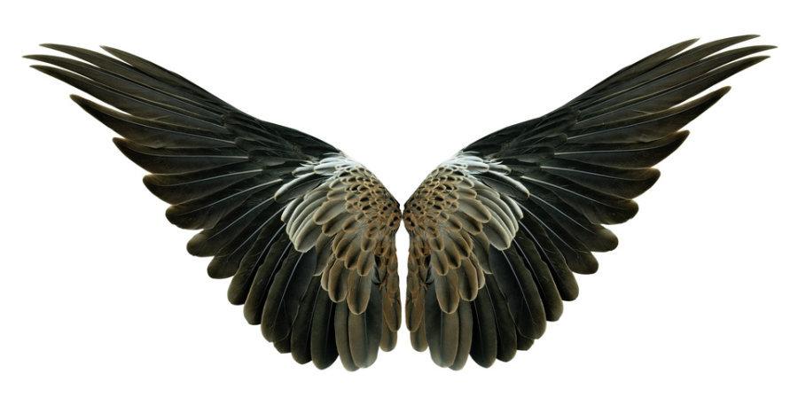 Kuşlar Kanatlarını Nasıl Kazandılar ? İpucu Bakterilerde