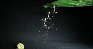 robot sinek tutunma-gerçek bilim