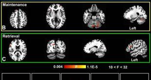 metilen mavisi beyin gelişimi