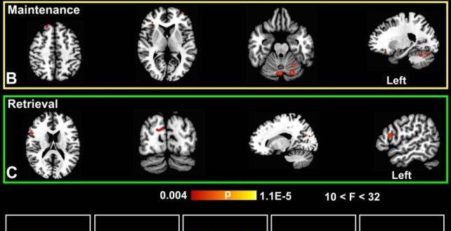 Metilen Mavisi Kısa Süreli Hafızayı Geliştiriyor