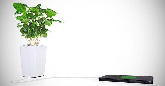 Bioo Telefonunuzu ,Saksıdaki Bitkinizin Fotosentez Enerjisiyle Şarj Ediyor