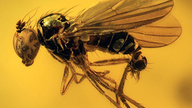 40 milyon yıllık sinek