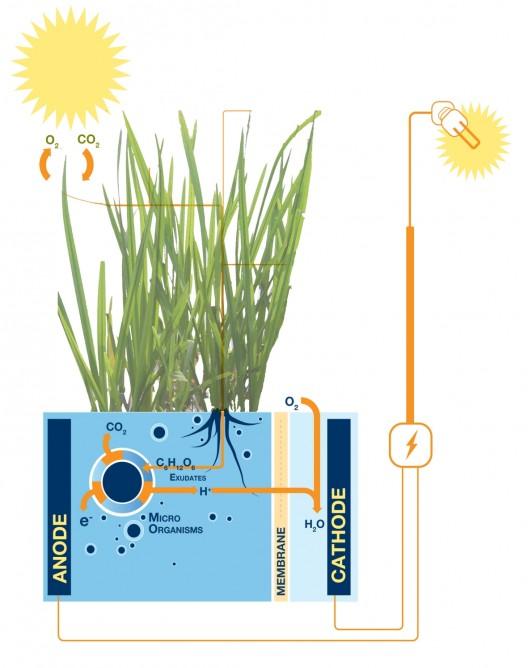 bitkilerden elektrik enerjisi elde etmek