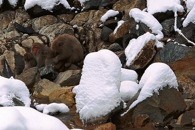12 gizlenen maymun