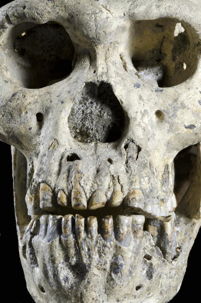 homo erectus dmanisi-gerçek bilim