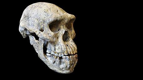 homo erectus zürich