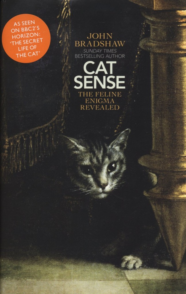 kediler insanları kedi