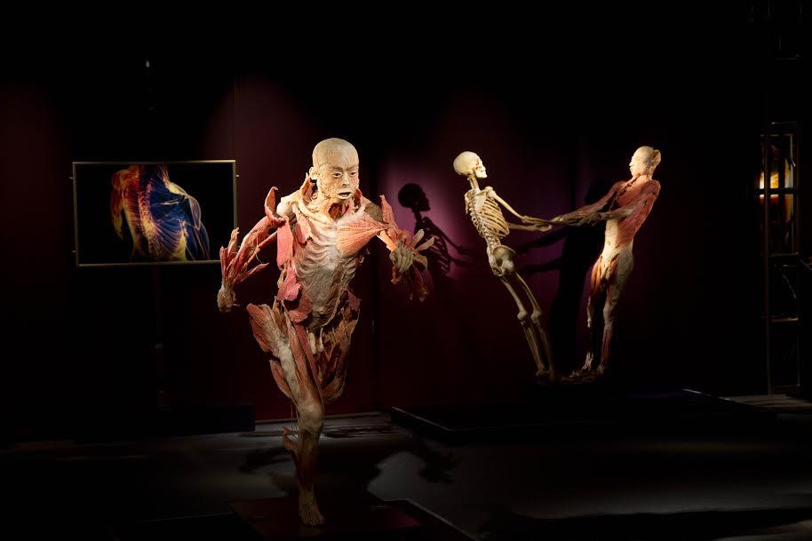 the human exhibition istanbul akvaryum-2