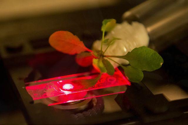 biyonik bitki nano