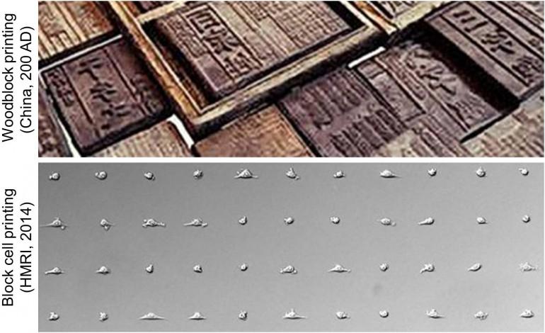 blocprinting-ile hücre baskısı