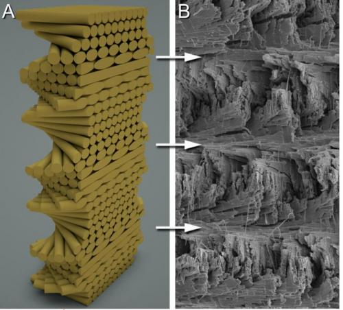 mantis karidesi spiral