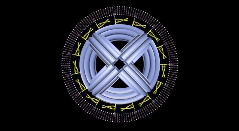 DNA Nano robot