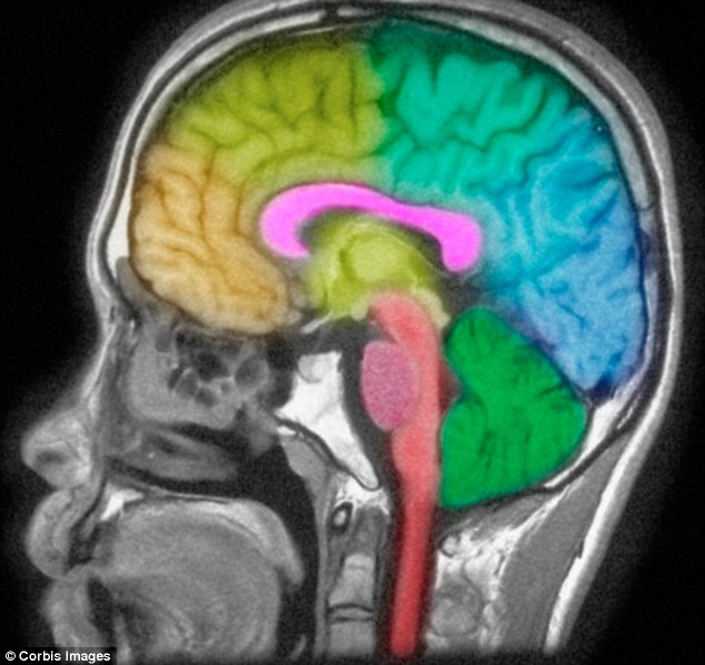 otizmli beyni-gerçek bilim