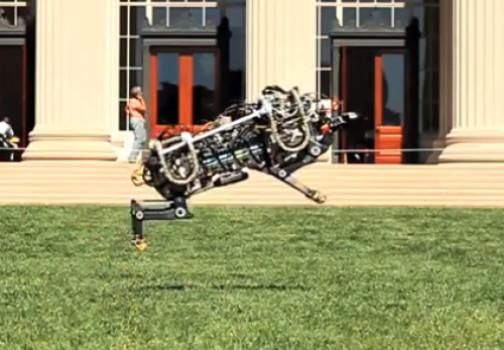 robot çita-gerçek bilim