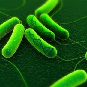 bakteri kaydedici