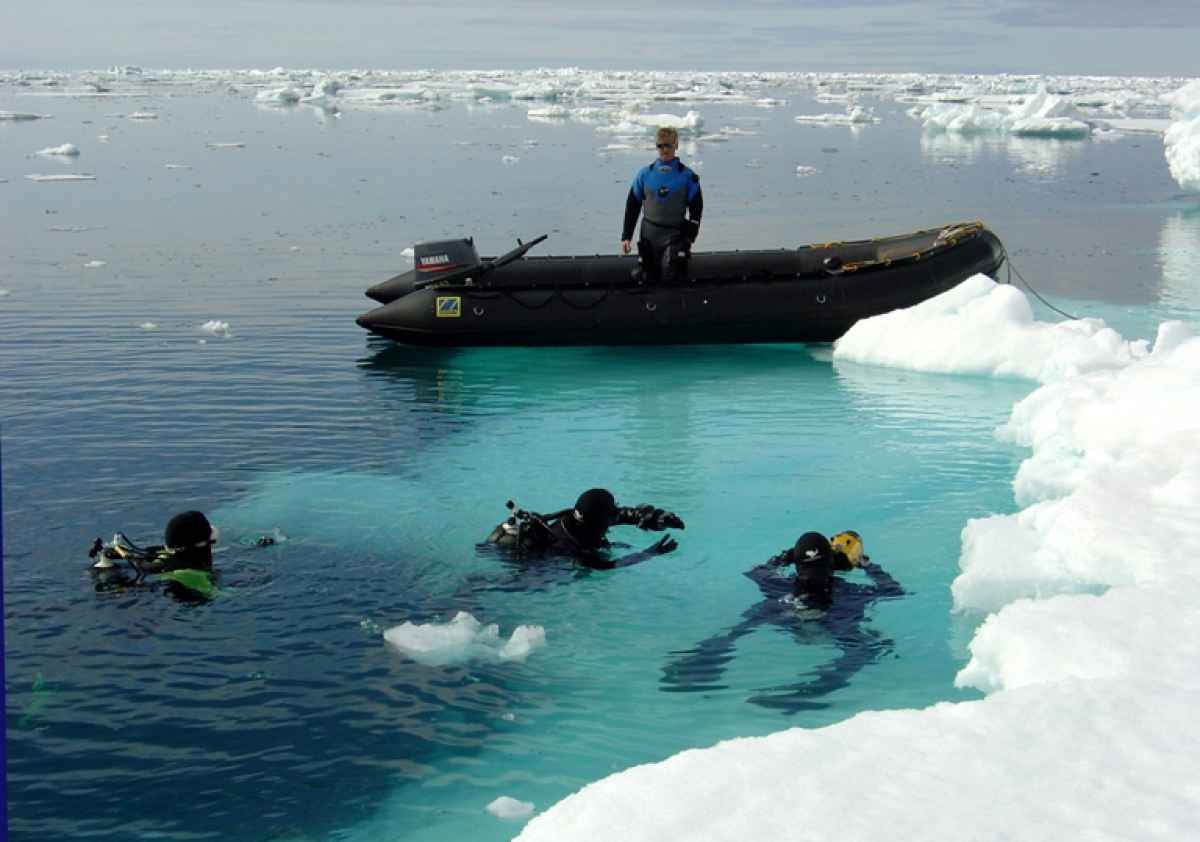 polar-diving