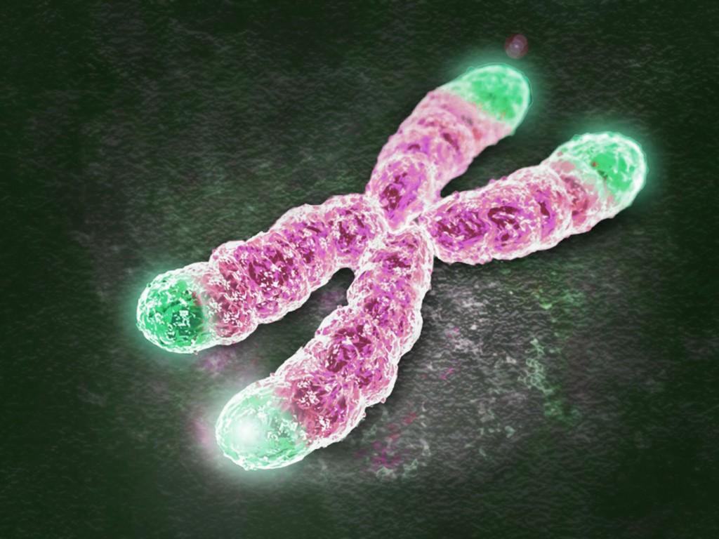 telomer yaşlılık