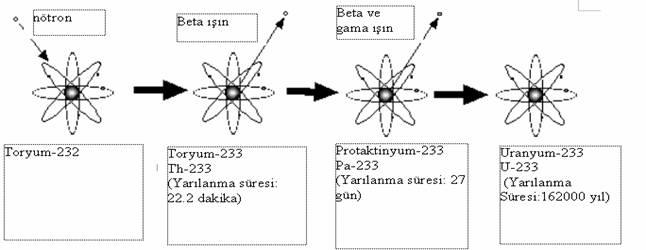 toryum reaksiyon