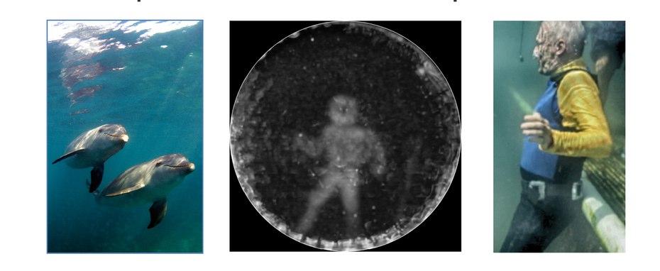 dolphin-sonar-imaging-8