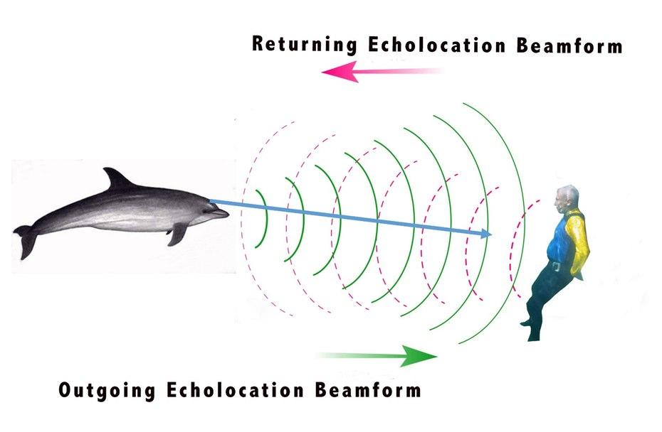 dolphin-sonar-imaging-9